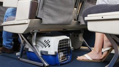 220 foto 1 trasportino gatto